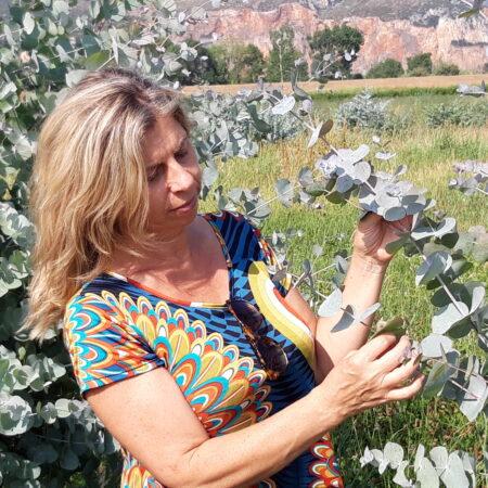 Dall'eucalipto un igienizzante per le mani e non solo: l'articolo su Agronotizie