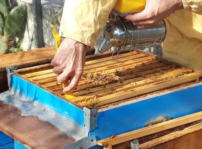 Natura e Benessere: Alla scoperta del Miele